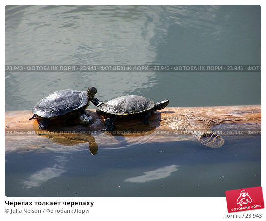 Черепах толкает черепаху, фото № 23943, снято 14 февраля 2007 г. (c) Julia Nelson / Фотобанк Лори