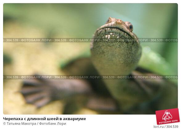 Купить «Черепаха с длинной шеей в аквариуме», фото № 304539, снято 1 мая 2008 г. (c) Татьяна Макотра / Фотобанк Лори