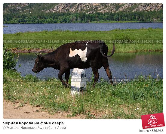 Черная корова на фоне озера, фото № 336963, снято 19 июня 2008 г. (c) Михаил Николаев / Фотобанк Лори