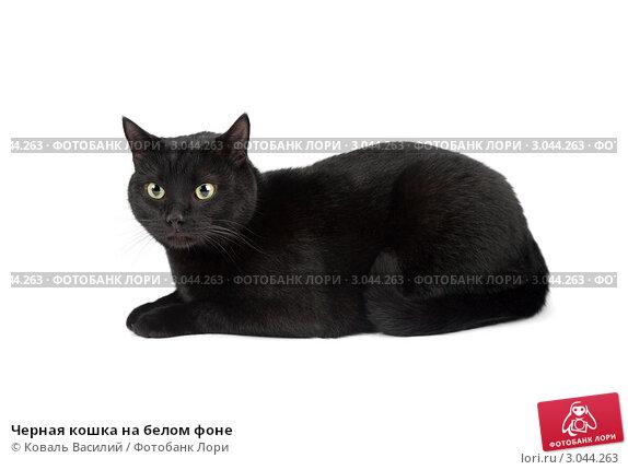 Купить «Черная кошка на белом фоне», фото № 3044263, снято 2 сентября 2011 г. (c) Коваль Василий / Фотобанк Лори