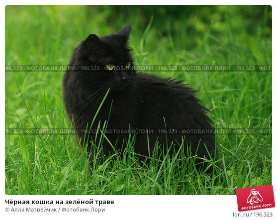 Чёрная кошка на зелёной траве, фото № 196323, снято 28 июня 2007 г. (c) Алла Матвейчик / Фотобанк Лори