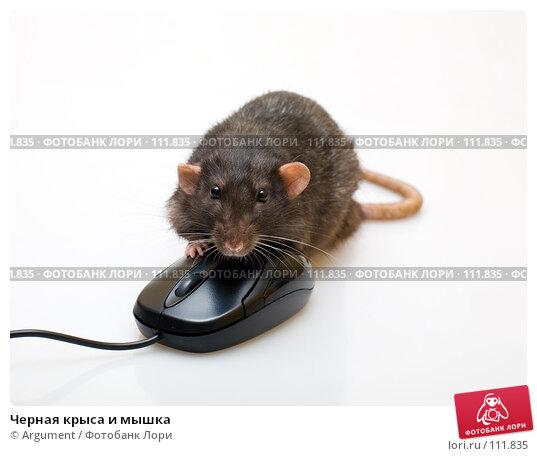 Черная крыса и мышка, фото № 111835, снято 7 сентября 2007 г. (c) Argument / Фотобанк Лори