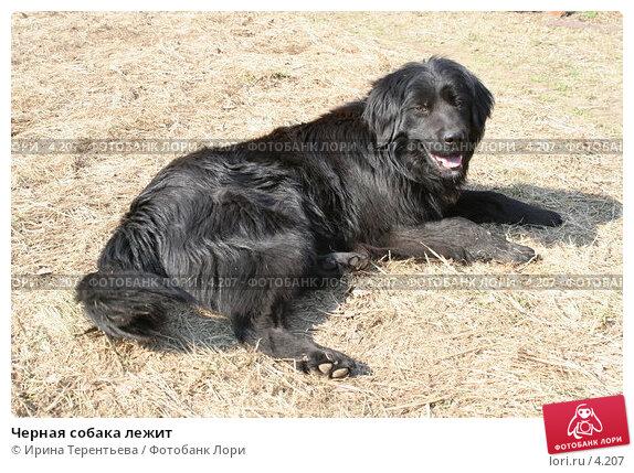 Черная собака лежит, эксклюзивное фото № 4207, снято 1 мая 2006 г. (c) Ирина Терентьева / Фотобанк Лори