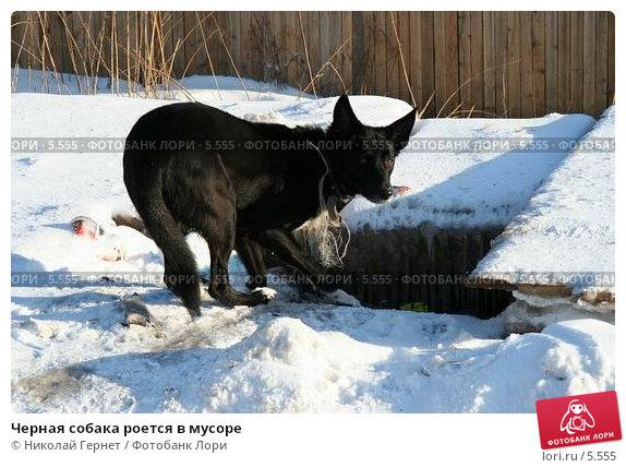 Черная собака роется в мусоре, фото № 5555, снято 25 февраля 2006 г. (c) Николай Гернет / Фотобанк Лори