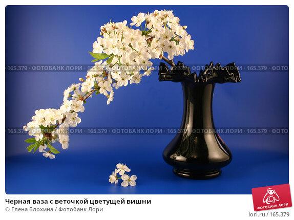 Черная ваза с веточкой цветущей вишни, фото № 165379, снято 13 мая 2007 г. (c) Елена Блохина / Фотобанк Лори