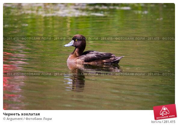 Чернеть хохлатая, фото № 281415, снято 10 мая 2008 г. (c) Argument / Фотобанк Лори