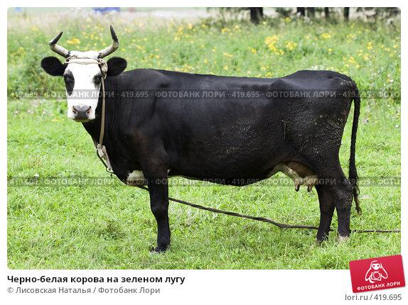 Черно-белая корова на зеленом лугу. Стоковое фото, фотограф Лисовская Наталья / Фотобанк Лори