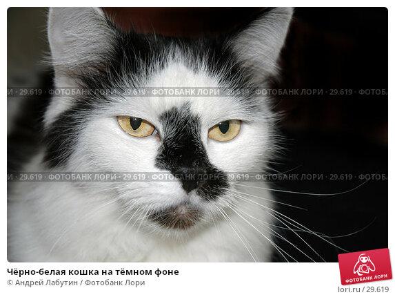 Купить «Чёрно-белая кошка на тёмном фоне», фото № 29619, снято 10 марта 2007 г. (c) Андрей Лабутин / Фотобанк Лори