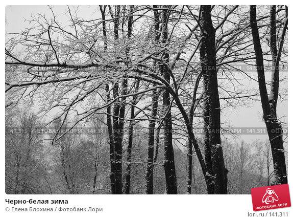 Черно-белая зима, фото № 141311, снято 5 марта 2007 г. (c) Елена Блохина / Фотобанк Лори
