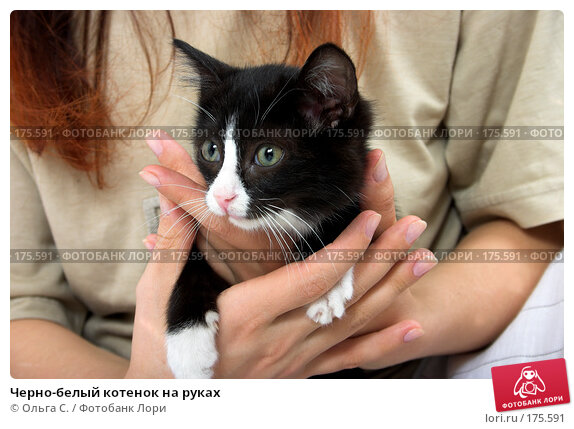 Черно-белый котенок на руках, фото № 175591, снято 28 мая 2017 г. (c) Ольга С. / Фотобанк Лори