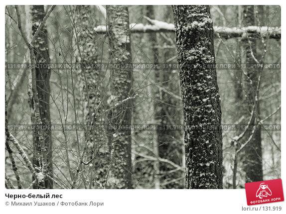 Купить «Черно-белый лес», фото № 131919, снято 28 ноября 2007 г. (c) Михаил Ушаков / Фотобанк Лори