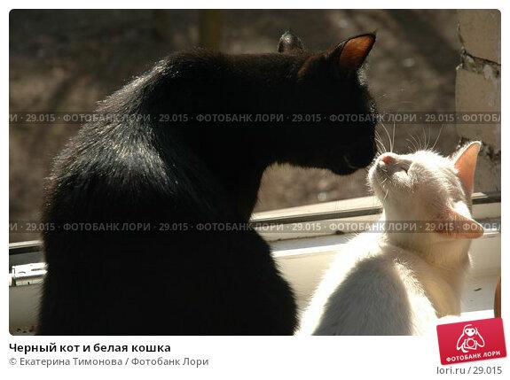 Черный кот и белая кошка, фото № 29015, снято 29 марта 2007 г. (c) Екатерина Тимонова / Фотобанк Лори