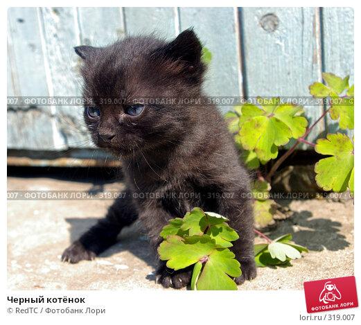 Черный котёнок, фото № 319007, снято 9 июня 2008 г. (c) RedTC / Фотобанк Лори