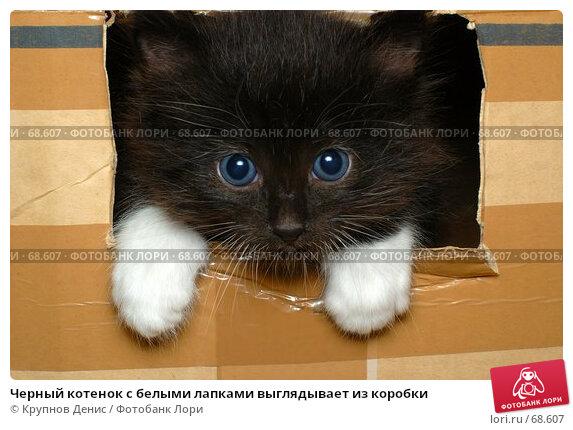 Черный котенок с белыми лапками выглядывает из коробки, фото № 68607, снято 3 июля 2007 г. (c) Крупнов Денис / Фотобанк Лори