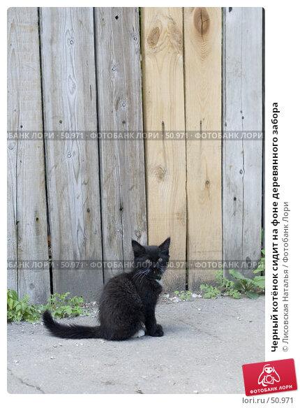 Купить «Черный котёнок сидит на фоне деревянного забора», фото № 50971, снято 7 июня 2007 г. (c) Лисовская Наталья / Фотобанк Лори