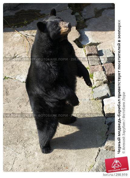 Черный медведь-барибал приветствует посетителей в зоопарке, фото № 298919, снято 22 сентября 2007 г. (c) Алексей Зарубин / Фотобанк Лори