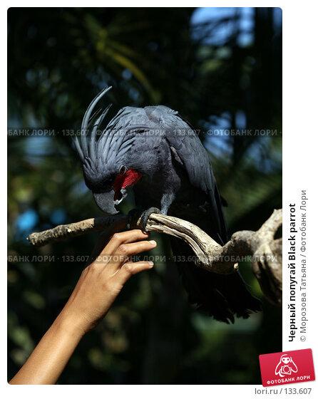 Черный попугай Black parrot, фото № 133607, снято 23 октября 2007 г. (c) Морозова Татьяна / Фотобанк Лори