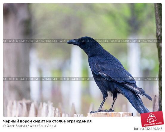 Черный ворон сидит на столбе ограждения. Стоковое фото, фотограф Олег Елагин / Фотобанк Лори