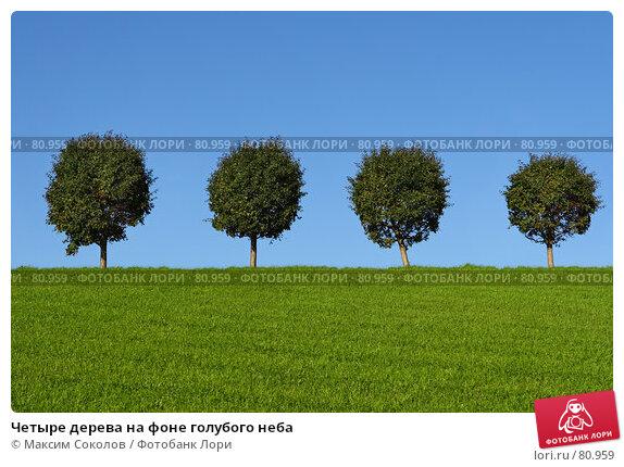 Четыре дерева на фоне голубого неба, фото № 80959, снято 5 сентября 2007 г. (c) Максим Соколов / Фотобанк Лори