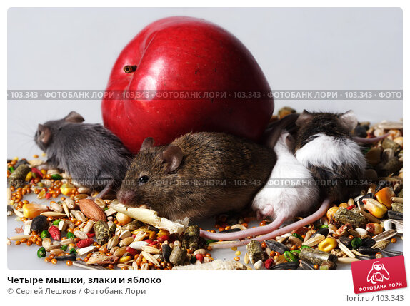 Четыре мышки, злаки и яблоко, фото № 103343, снято 21 июля 2017 г. (c) Сергей Лешков / Фотобанк Лори