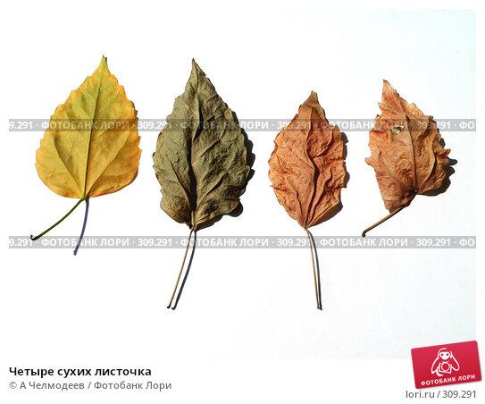 Четыре сухих листочка, фото № 309291, снято 15 мая 2006 г. (c) A Челмодеев / Фотобанк Лори