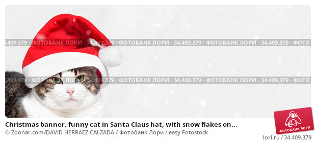 Christmas banner. funny cat in Santa Claus hat, with snow flakes on... Стоковое фото, фотограф Zoonar.com/DAVID HERRAEZ CALZADA / easy Fotostock / Фотобанк Лори