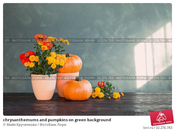 Купить «chrysanthemums and pumpkins on green background», фото № 32276783, снято 6 октября 2019 г. (c) Майя Крученкова / Фотобанк Лори