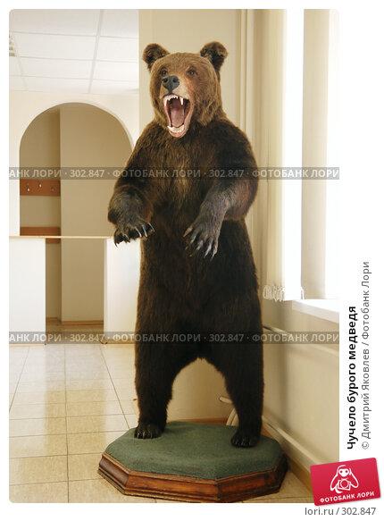 Чучело бурого медведя, фото № 302847, снято 8 мая 2008 г. (c) Дмитрий Яковлев / Фотобанк Лори