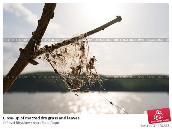 Купить «Close-up of matted dry grass and leaves», фото № 31420363, снято 11 мая 2019 г. (c) Pavel Biryukov / Фотобанк Лори