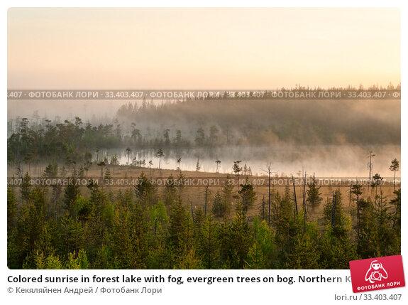 Купить «Colored sunrise in forest lake with fog, evergreen trees on bog. Northern Karelia, Russia», фото № 33403407, снято 12 июня 2009 г. (c) Кекяляйнен Андрей / Фотобанк Лори