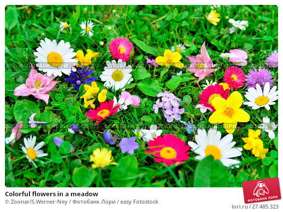 a narrative about a meadow of flowers