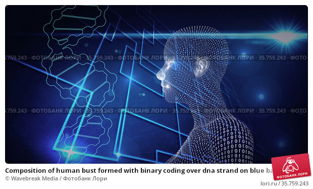 Composition of human bust formed with binary coding over dna strand on blue background. Стоковое фото, агентство Wavebreak Media / Фотобанк Лори