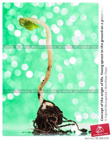 Купить «Concept of the origin of life. Young sprout in the ground on a green background with bokeh», фото № 30306675, снято 25 февраля 2019 г. (c) Сергей Молодиков / Фотобанк Лори