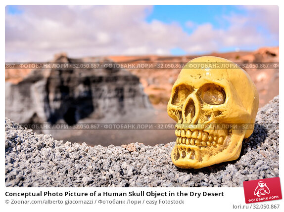 Conceptual Photo Picture of a Human Skull Object in the Dry Desert. Стоковое фото, фотограф Zoonar.com/alberto giacomazzi / easy Fotostock / Фотобанк Лори