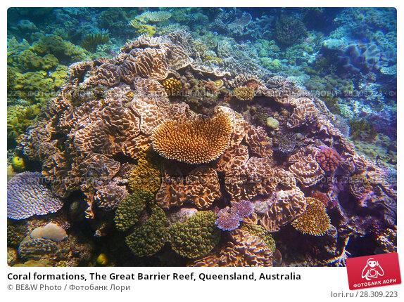 Купить «Coral formations, The Great Barrier Reef, Queensland, Australia», фото № 28309223, снято 21 апреля 2019 г. (c) BE&W Photo / Фотобанк Лори