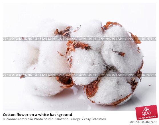 Cotton flower on a white background. Стоковое фото, фотограф Zoonar.com/Yeko Photo Studio / easy Fotostock / Фотобанк Лори