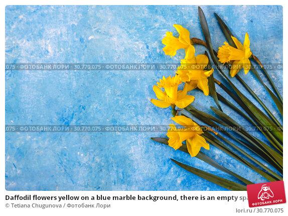 Купить «Daffodil flowers yellow on a blue marble background, there is an empty space for text. Flat Lay. View from above. Concept.», фото № 30770075, снято 11 апреля 2019 г. (c) Tetiana Chugunova / Фотобанк Лори