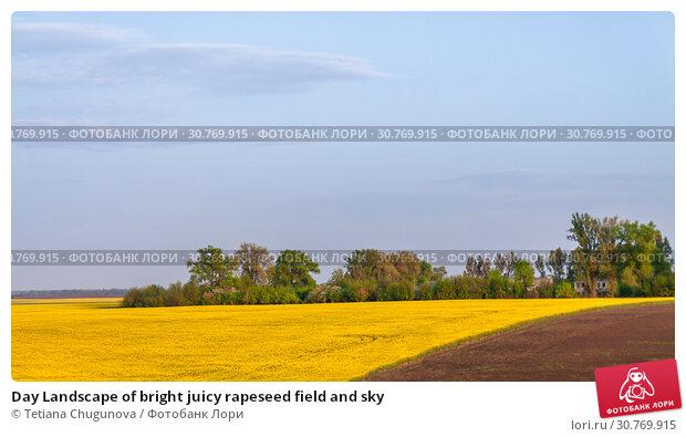 Купить «Day Landscape of bright juicy rapeseed field and sky», фото № 30769915, снято 2 мая 2017 г. (c) Tetiana Chugunova / Фотобанк Лори