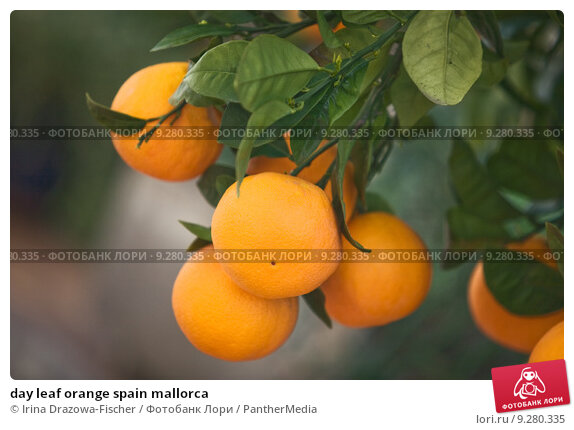 orange leaf market analysis The 'global and chinese orange leaf absolute industry, 2013-2023 market research report' is a professional and in-depth study on the current state of the global orange leaf absolute industry with a focus on the chinese market.