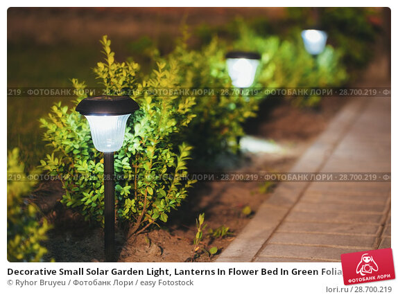 Купить «Decorative Small Solar Garden Light, Lanterns In Flower Bed In Green Foliage. Garden Design. Solar Powered Lamps In Row.», фото № 28700219, снято 17 июня 2016 г. (c) easy Fotostock / Фотобанк Лори