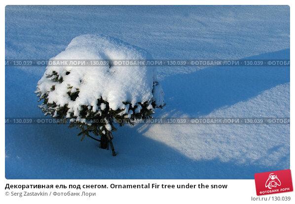 Купить «Декоративная ель под снегом. Ornamental Fir tree under the snow», фото № 130039, снято 1 декабря 2005 г. (c) Serg Zastavkin / Фотобанк Лори