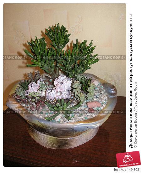Декоративная композиция в ней растут кактусы и суккуленты, фото № 149803, снято 25 марта 2005 г. (c) Константин Босов / Фотобанк Лори