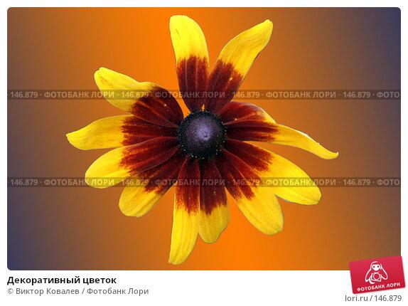 Купить «Декоративный цветок», фото № 146879, снято 26 августа 2007 г. (c) Виктор Ковалев / Фотобанк Лори