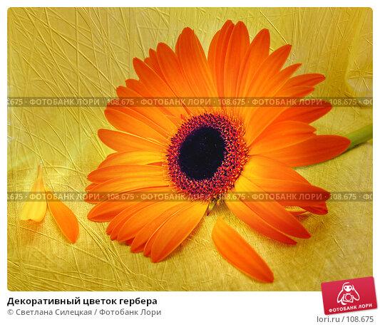Декоративный цветок гербера, фото № 108675, снято 23 июня 2007 г. (c) Светлана Силецкая / Фотобанк Лори