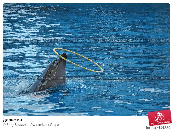 Купить «Дельфин», фото № 134339, снято 4 апреля 2007 г. (c) Serg Zastavkin / Фотобанк Лори