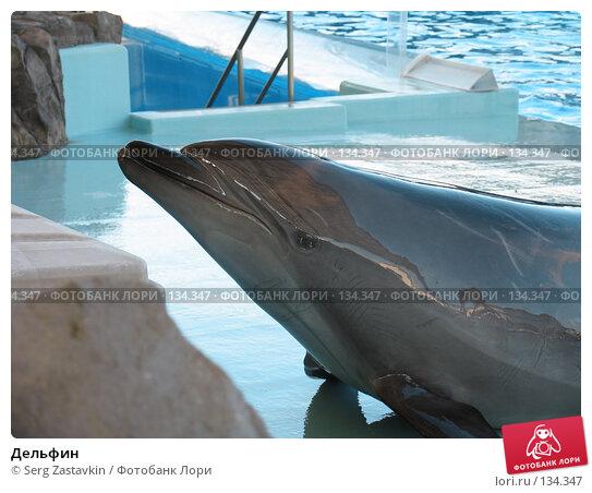 Дельфин, фото № 134347, снято 4 апреля 2007 г. (c) Serg Zastavkin / Фотобанк Лори