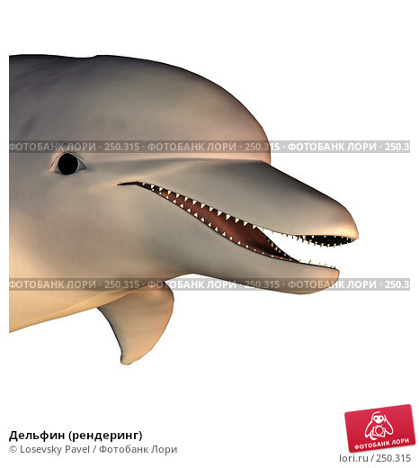 Дельфин (рендеринг), иллюстрация № 250315 (c) Losevsky Pavel / Фотобанк Лори