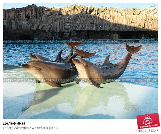Дельфины, фото № 134343, снято 4 апреля 2007 г. (c) Serg Zastavkin / Фотобанк Лори