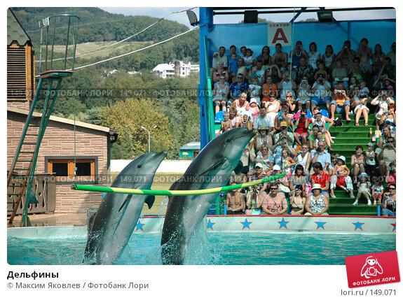 Дельфины, фото № 149071, снято 12 сентября 2007 г. (c) Максим Яковлев / Фотобанк Лори