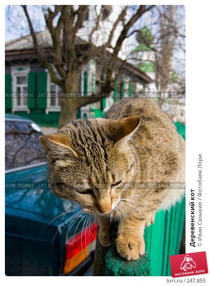 Деревенский кот, фото № 247855, снято 9 марта 2008 г. (c) Иван Сазыкин / Фотобанк Лори